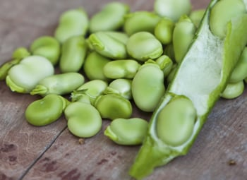 Fava beans are as filling as nuts