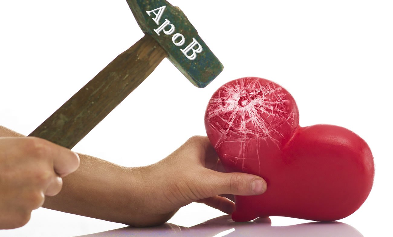 ApoB (the bad protein) and Cholesterol.