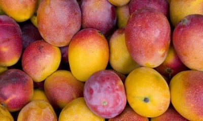 Best Ever Mango Recipes from Miami