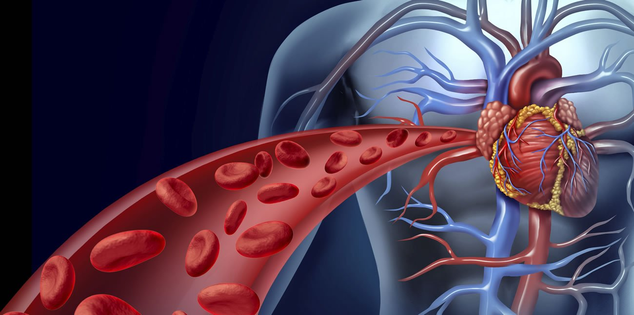 The endothelium is the general contractor of your cardiovascular health.