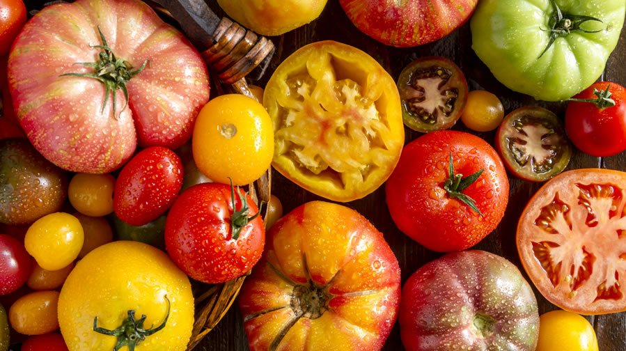 Tomato Recipes and Fun Facts
