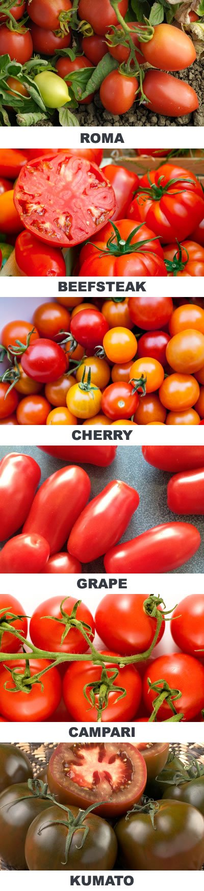 Guide to Tomato Varieties