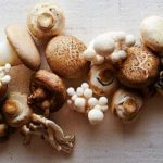 Health Benefits of Mushrooms and Recipes