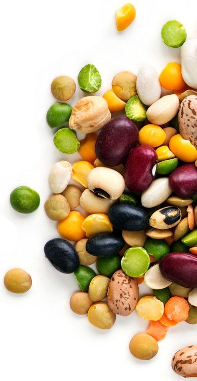 Beans are a Nightshade Vegetable, but are among the healthiest foods on earth.